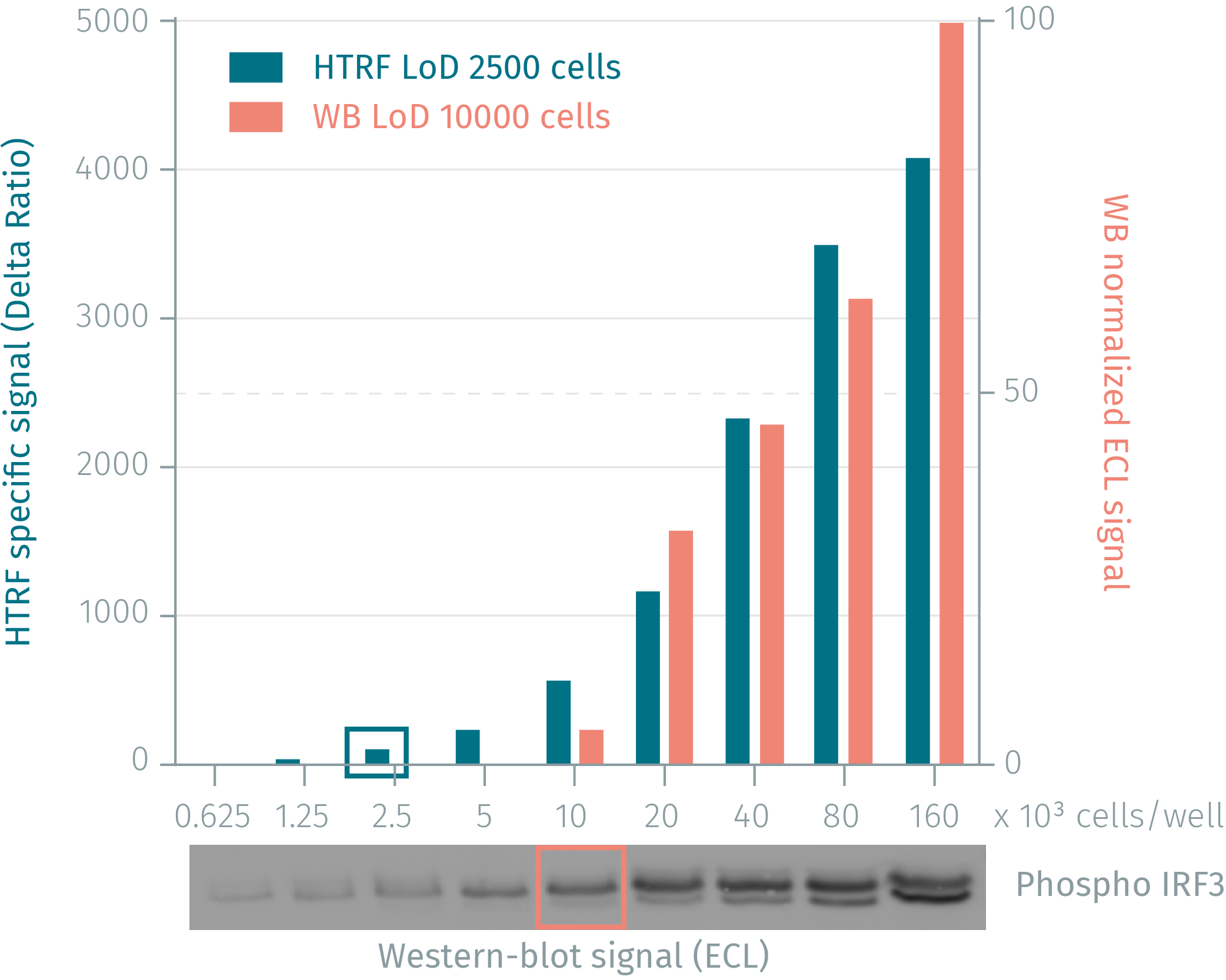 Phospho-IRF3 assay compared to western Blot with human MCF7 cells