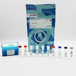 Phospho-ZAP-70 (Tyr319) cellular kit